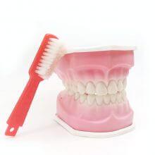 ماکت دهان و دندان